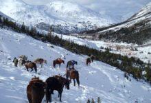 Photo of Kiwi In The Yukon