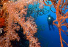 Photo of Dive Munda in Full HD
